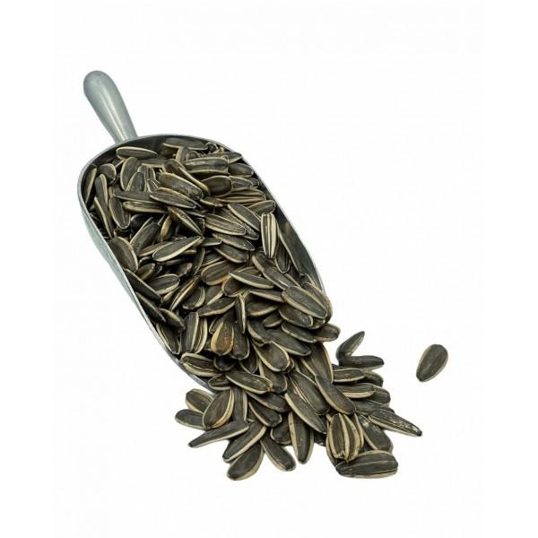 Fresh Raw Dakota Seeds 500g