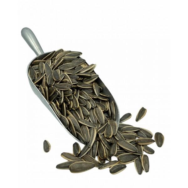 Fresh Roasted Unsalted Dakota Seed 500g