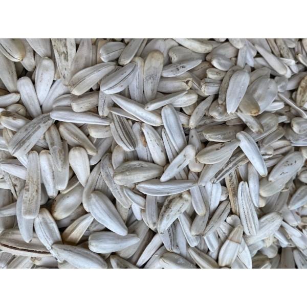 Fresh Salted White Sunflower Seed 500g